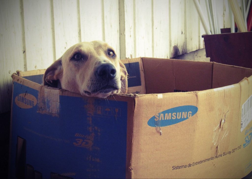 como jugar con tu perro cachorro en casa como jugar con un perro juegos para perros