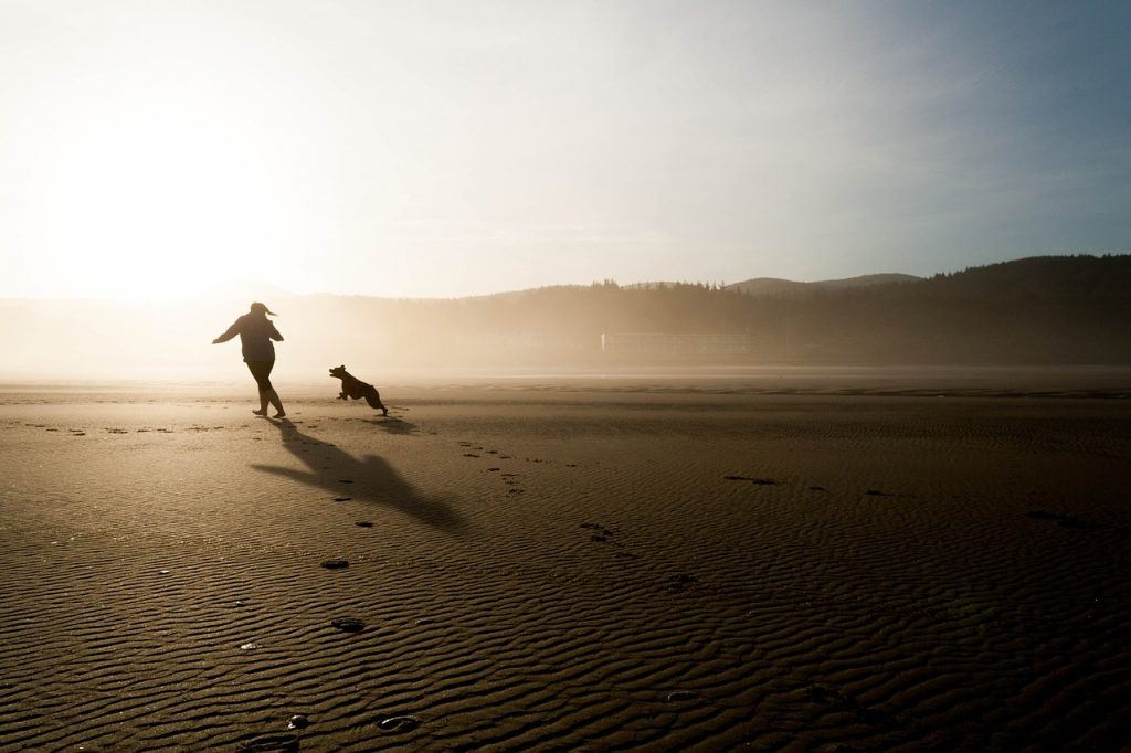 como jugar con tu perro como jugar con tu perro en casa sin juguetes cachorro como jugar con un perro ciego
