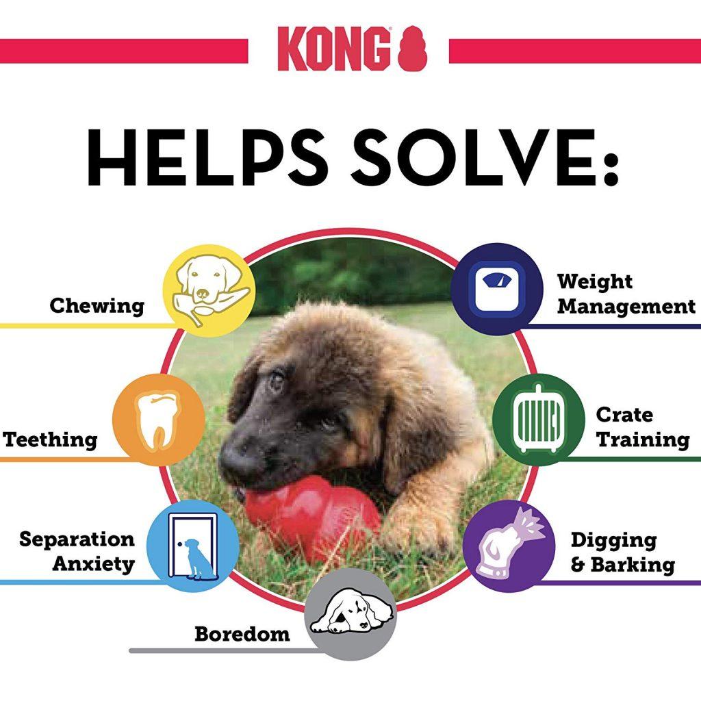 como jugar con tu perro como jugar con tu perro en casa sin juguetes cachorro juguetes kong