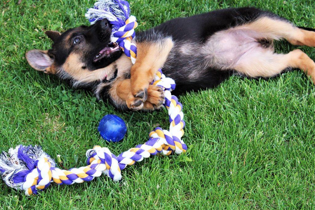 como jugar con tu perro como jugar con tu perro en casa sin juguetes como jugar con un perro