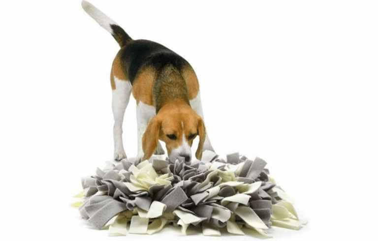 alfombra olfativa ieeuumler snuffle mat para perros estera de entrenamiento juguetes de inteligencia para perros comprar oferta precio opiniones catalogo tienda online amazon