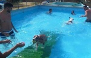 Piscina para perros tres cantos peludos al agua