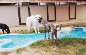 piscina para perros barcelona can fauna