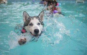 piscina para perros madrid parque rodriguez sahagún