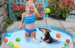 piscina para perros wimypet piscina para mascotas plegable comprar oferta precio opiniones comparativa guia de compra tienda online las mejores piscinas para perros
