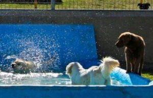 piscinas para perros barcelona Centre Caní de Pals