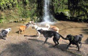 piscinas para perros barcelona font de les dous