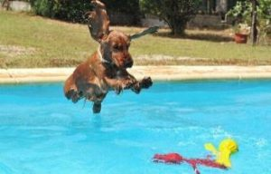 piscinas para perros barcelona resort canino can jané