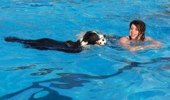 piscinas para perros comprar oferta precio opiniones catalogo baratas comparativa guia de compra tienda online las mejores