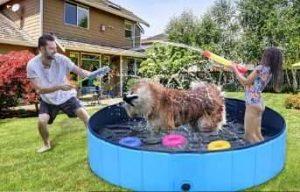 piscinas para perros comprar ofertas precios baratas opiniones catalogo comparativa tienda online las mejores piscinas para perros