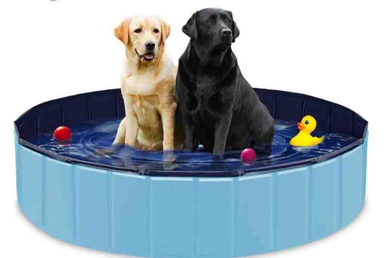 piscinas para perros labrador