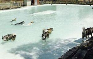 piscinas para perros madrid campus perruno