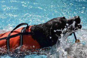 piscinas para perros rehabilitaciion y terapia