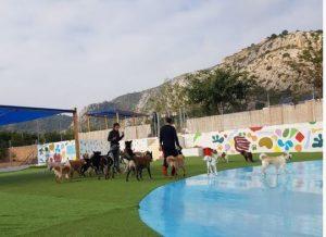 piscinas para perros valencia resort animal gos aventura castellón