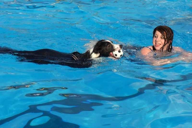 piscinas para perros ventajas