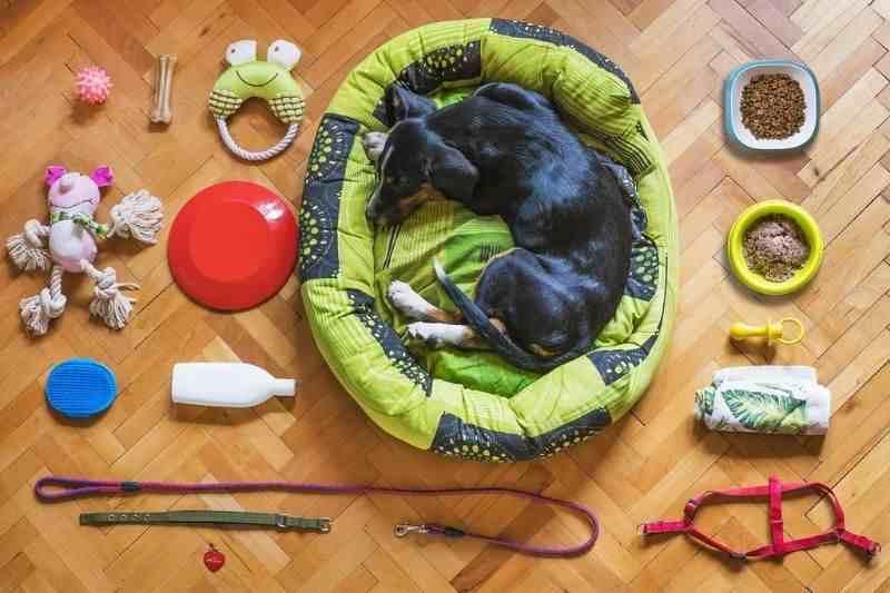 juguetes grandes para perros