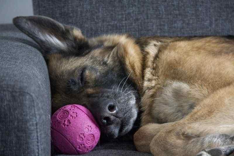 los mejores juguetes para calmar a los perros grandes medianos pequeños cachorros o adolescentes cuando estan solos